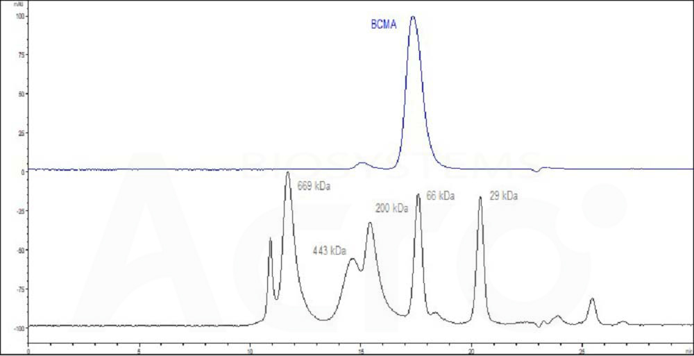 Human BCMA, Fc Tag (HPLC verified) (Cat. No. BC7-H5254) HPLC images