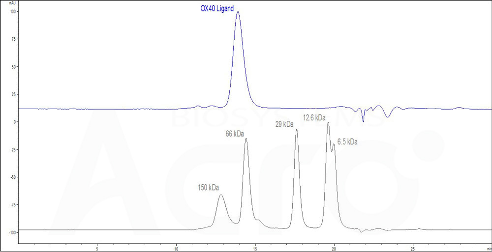 Human OX40 Ligand (active trimer) (HPLC-verified) (Cat. No. OXL-H52Q8) HPLC images