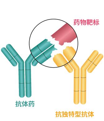 药物靶标复合物型