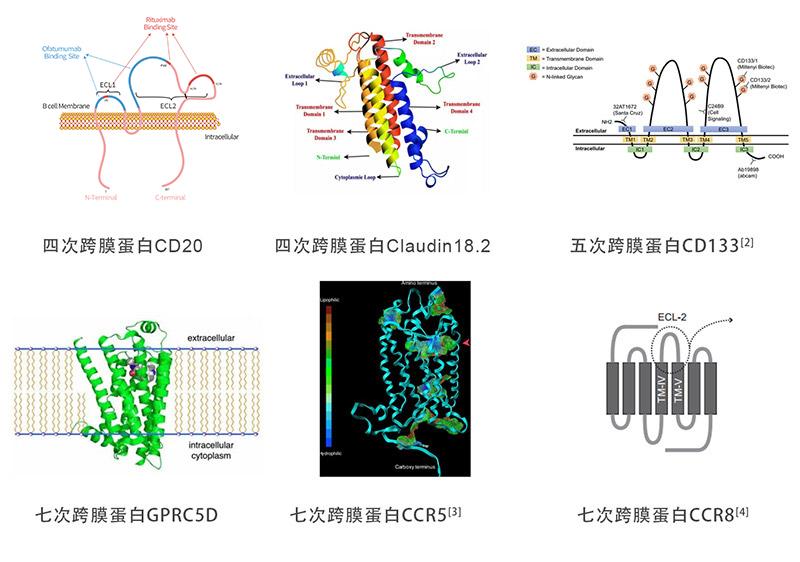 多次跨膜靶点蛋白(ACROBiosystems均可提供)