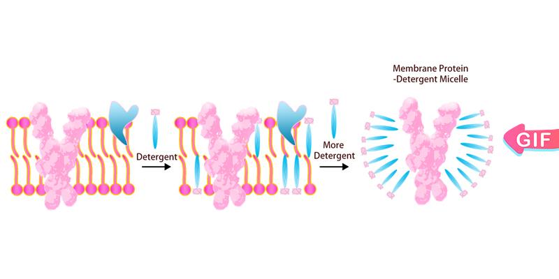 膜蛋白-去垢剂技术平台
